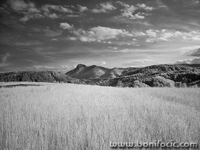bw___Wide Field___Ljubosina, Croatia.